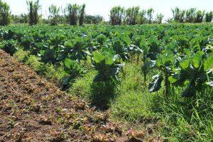 agriculturaorganica